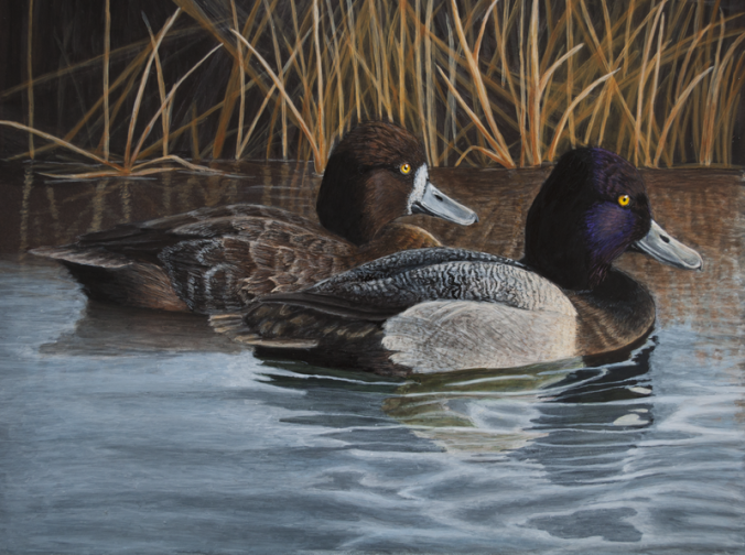 "Morning Bluebills 7""x9"" in golden heavy body acrylic. The original has sold, but prints are available"