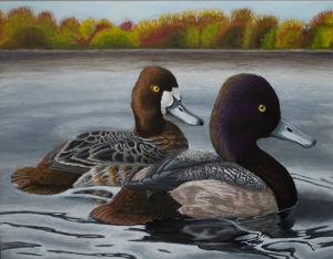 Scaups in Fall